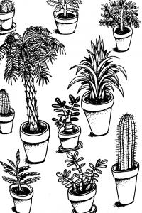 south plants