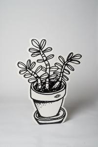 plante_grasse_blanche