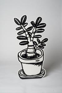 plante_grasse_noire